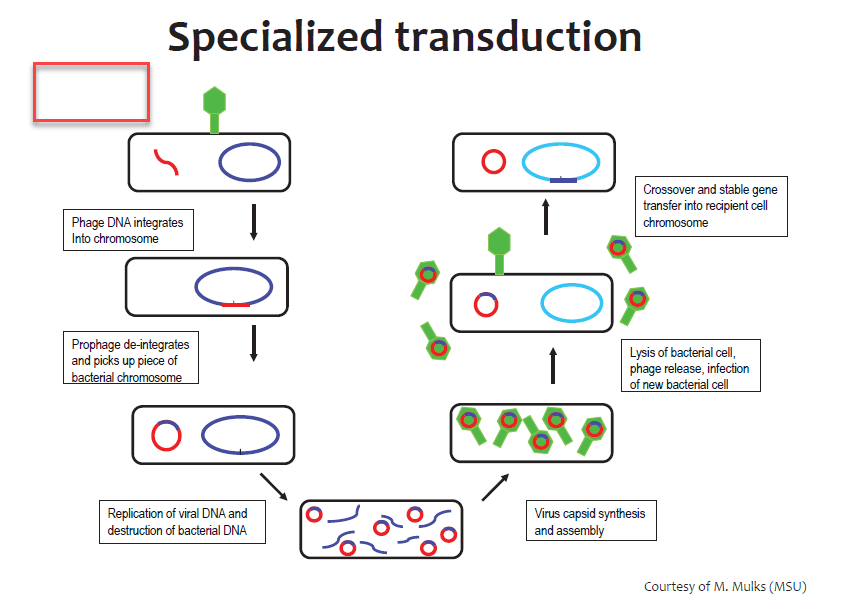 Specialized Transduction strucute