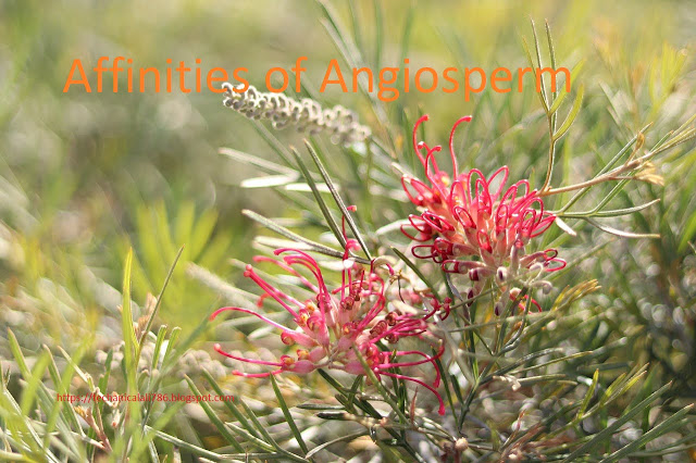 Affinities of Gymnosperms with Angiosperms